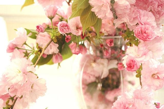 6 Flower Powers til livet ditt